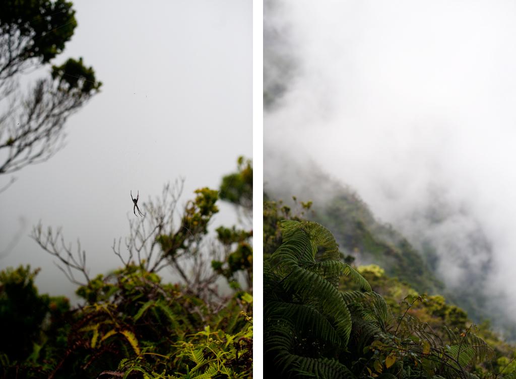 Kauai 23