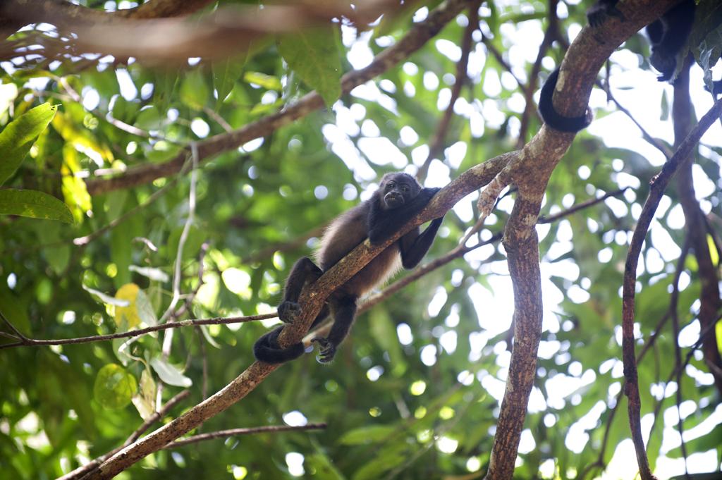 Montezuma Costa Rica 66