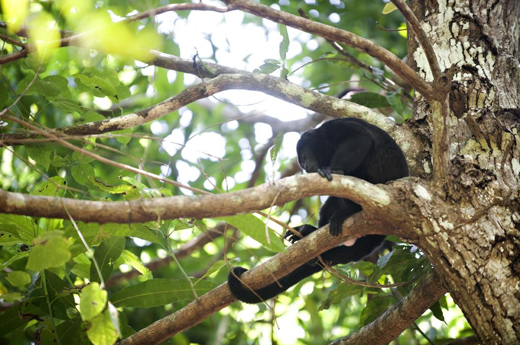 Montezuma Costa Rica 69