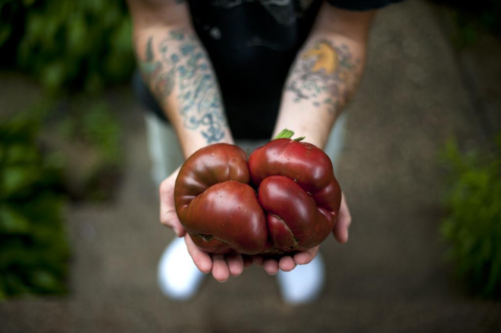 Ginormous Heirloom tomato 2