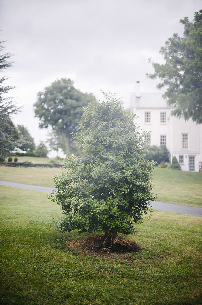 A misty bush