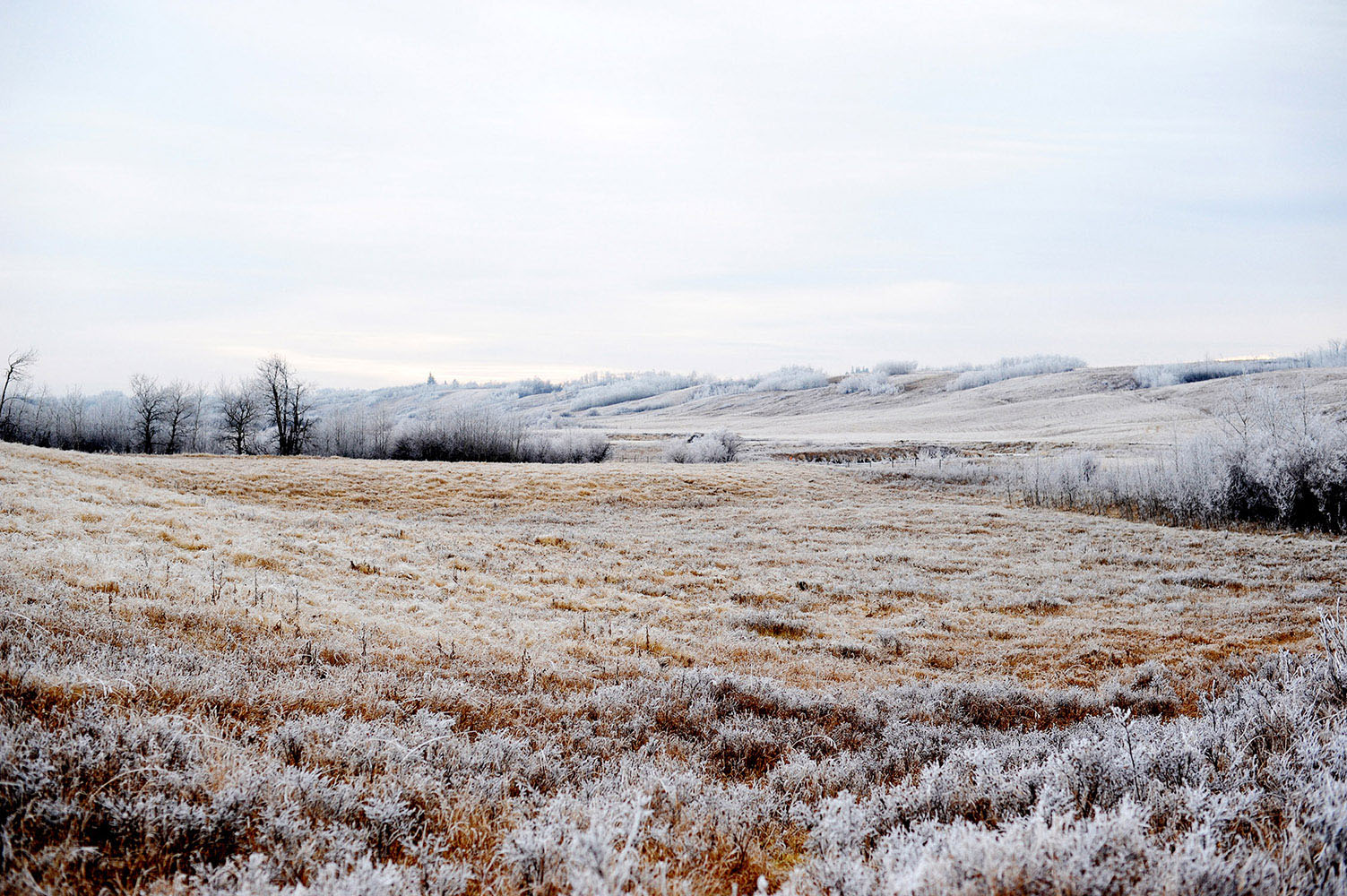 Frosty field in Saskatchewan, Canada