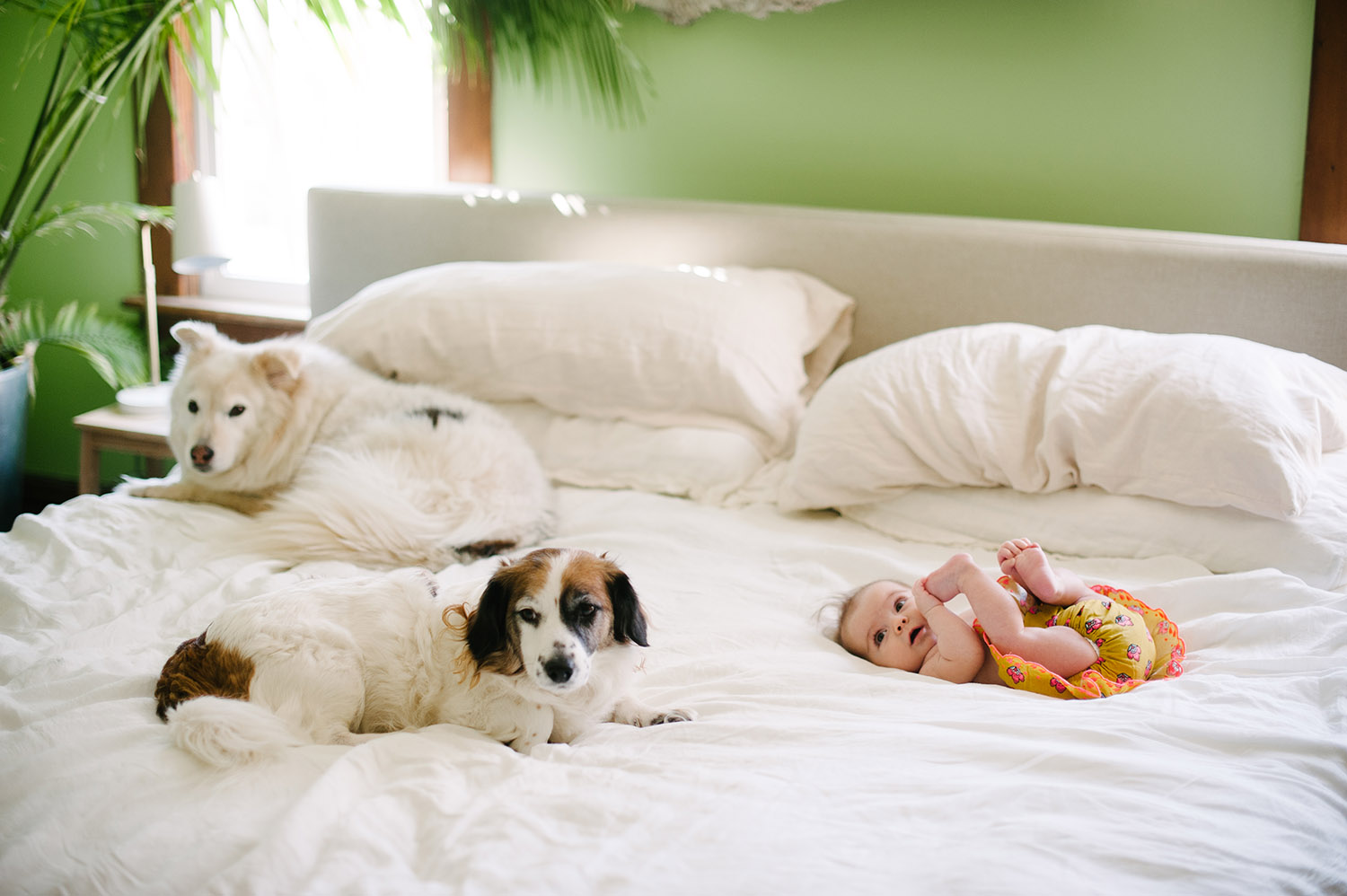 a baby on a bed with dogs